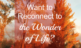 Want to Reconnect to the Wonder of Life?