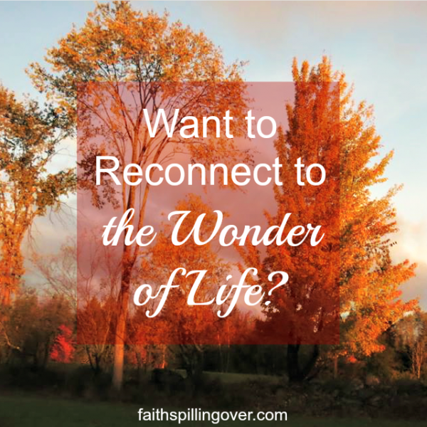 Let's take a few moments every day to step away from the noise of life and remember the wonder of God and His gifts.