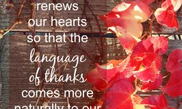 When You Need to Remember the Language of Thanks